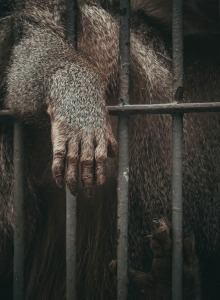 animal-1839936_1920